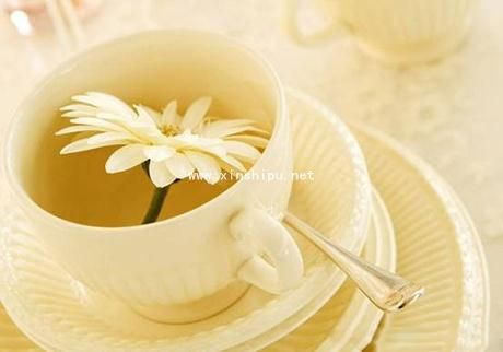 7月中药花茶季 教你学会喝花茶养生
